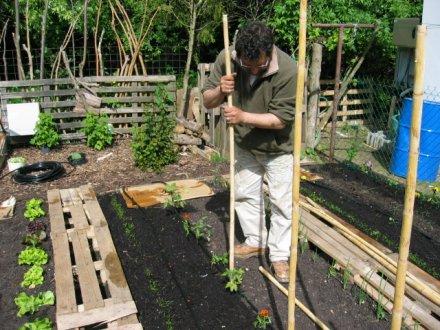 Plante pour pergola abri jardin bois france - Pergola bambou jardin ...